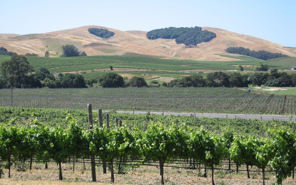Guest Blog: Riding in Northern California's Wine Country