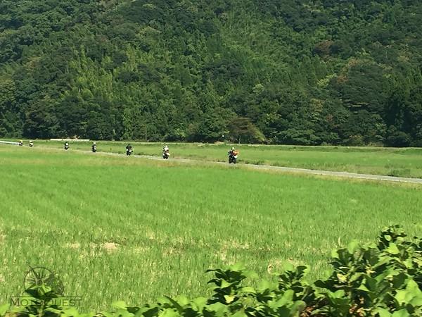 Japan Fields