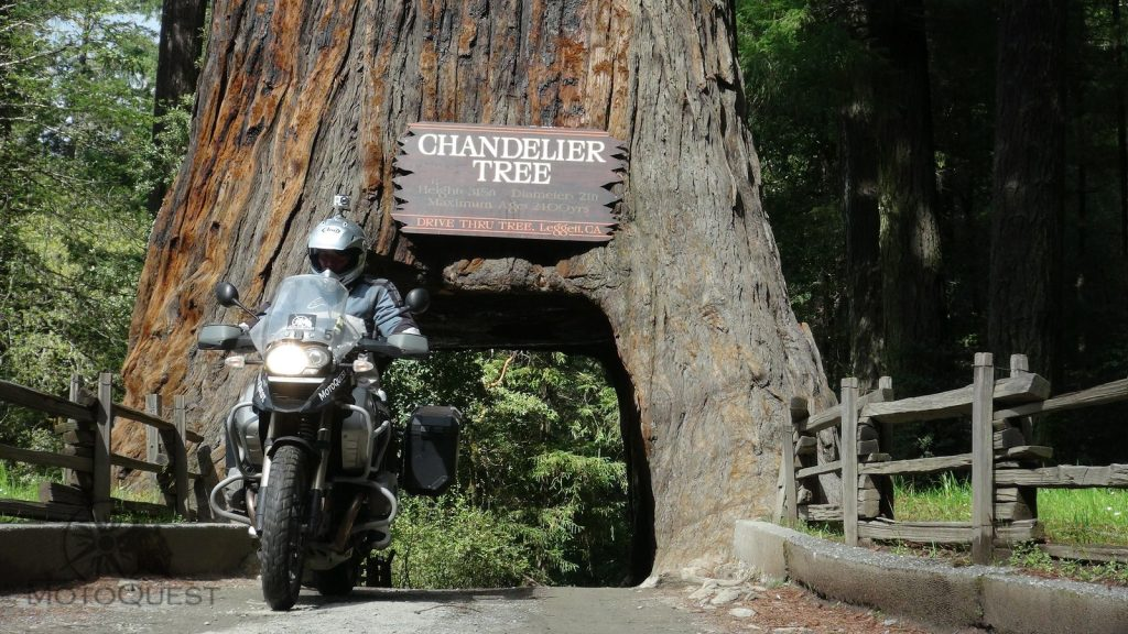PCH South Adventure at the Chandelier Tree